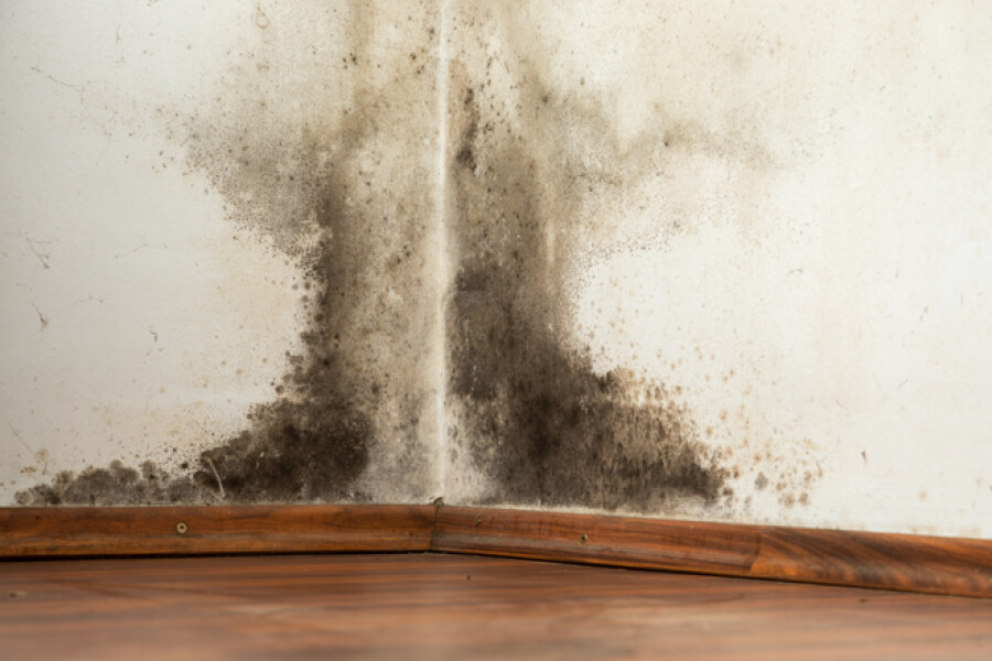 Selling house with damp problems